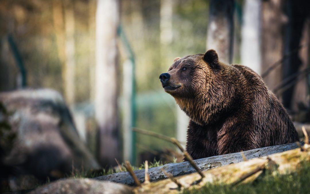 Best Bear Sprays: The Top 5 of 2020